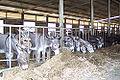 Donkey farm.jpg
