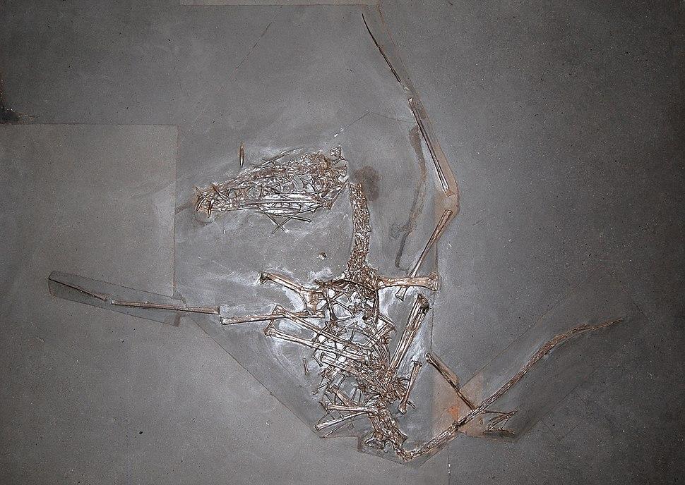 DorygnathusVienna