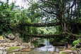 Double Decker Living Root Bridge1.jpg