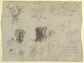 Drawing, Nature Studies, probably from Colombia- Monkey, Parasites and Trees, 1853 (CH 18194013).jpg