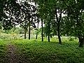 Dykanskyi Landscape Park (10.05.19).jpg