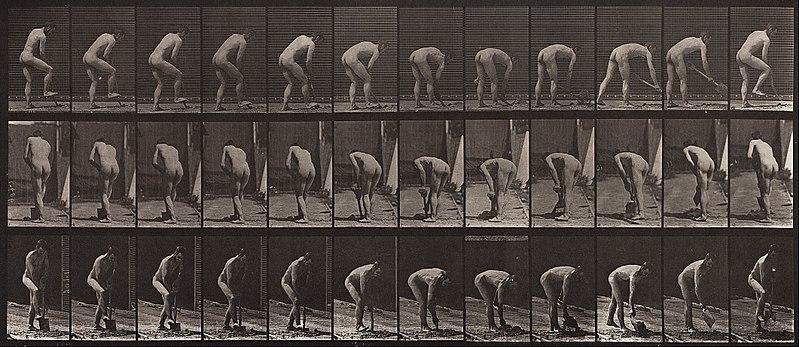 File:Eadweard Muybridge - Animal Locomotion, Plate 388 - Google Art Project.jpg