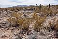 East bajada of Black Mountain - Flickr - aspidoscelis (1).jpg