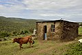 Eastern Cape, South Africa (20518632841).jpg