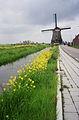 Edam - Zuidpoldermolen with flowers.jpg