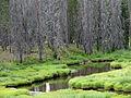 Elk Creek (15197224850).jpg