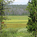Elk Meadow (15360931046).jpg