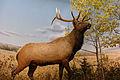 Elk diorama - Manitoba Museum (6931227307).jpg