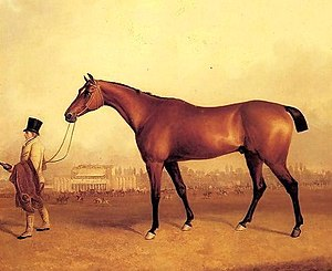 Emilius (horse) - Emilius with a groom. Painting by William Tasker.