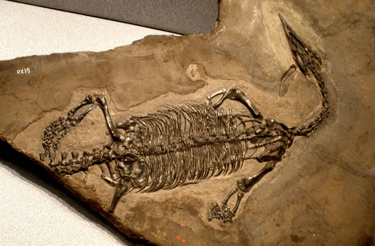 Dating of fossils wiki
