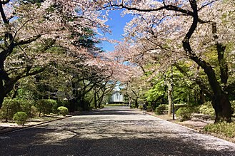 International Christian University - The entrance to ICU leading up to the university chapel. The road has rows of cherry blossom trees on both side which bloom in spring, signifying the start of a new school year.