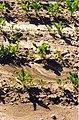 Erosion flächenhaft035.jpg