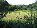 Eselsmühle, Schafe auf der Weide.jpg