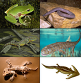 Examples of Amphibia.png