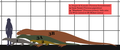 Extant Monitor lizards-Megalania SIZE fr.png