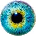 Eye I.jpg