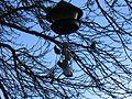 Fågelmatare i Tyresö 1.jpg