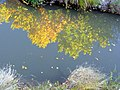 FALL REFLECTION - panoramio.jpg