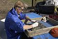 FEMA - 20567 - Photograph by Marvin Nauman taken on 11-16-2005 in Louisiana.jpg