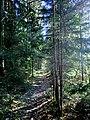 FGW bei Creußen - panoramio.jpg
