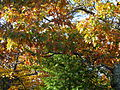 Fall-trees-nature - West Virginia - ForestWander.jpg