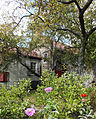 Fall Blooms- Old Stone House.jpg