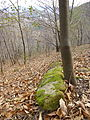 Fallen leaves mendizorrotz 02.JPG