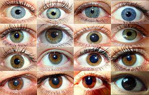 olika färg på ögonen