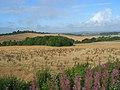 Farmland, Britwell Hill - geograph.org.uk - 932681.jpg