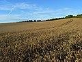 Farmland, Farnborough - geograph.org.uk - 928508.jpg
