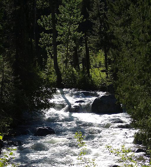 Fast nature creek