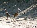 Fauna en el medano - panoramio.jpg