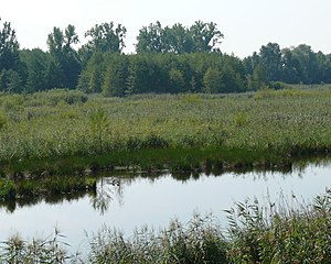 Muggensturm - The Federbachbruch nature reserve