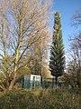 Fir Tree^ - geograph.org.uk - 2181265.jpg