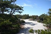 Einer Der Wege Im Robert Moses State Park