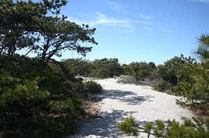Robert Moses State Park (Long Island) - A path through the trees at Robert Moses State Park.