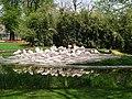 Flamingos in der Wilhelma.JPG
