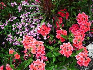 Français : Fleurs au jardin public de Saintes