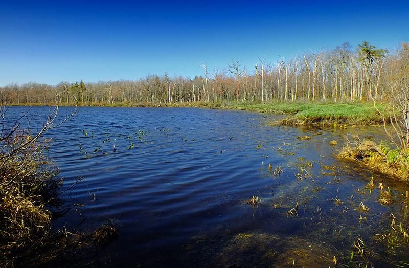 File:Flickr - Nicholas T - Grass Lake.jpg