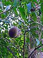 Flickr - archer10 (Dennis) - Belize-0985.jpg