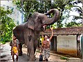 Flickr - ronsaunders47 - ELEPHANTS OF SRI LANKA. POSE AND SMILE FOR THE TOURISTS PLEASE..jpg