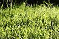 Flora of Israel IMG 0253 (11772742636).jpg