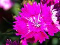 Flower-110.jpg