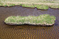Foot shape pond island.jpg