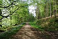 Footpath along the edge of St Leonards Forest - geograph.org.uk - 1288526.jpg