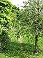 Footpath on the south bank of the River Tyne near Hexham Bridge - geograph.org.uk - 818730.jpg