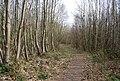 Footpath through Pitfield Wood - geograph.org.uk - 1256296.jpg