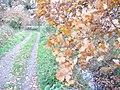Footpath to Trigg's Lock - geograph.org.uk - 1047623.jpg