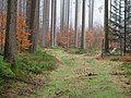 Forest at Wurmberg 23.jpg