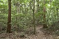 Forest in Mt.Gozen (Ibaraki) 03.jpg